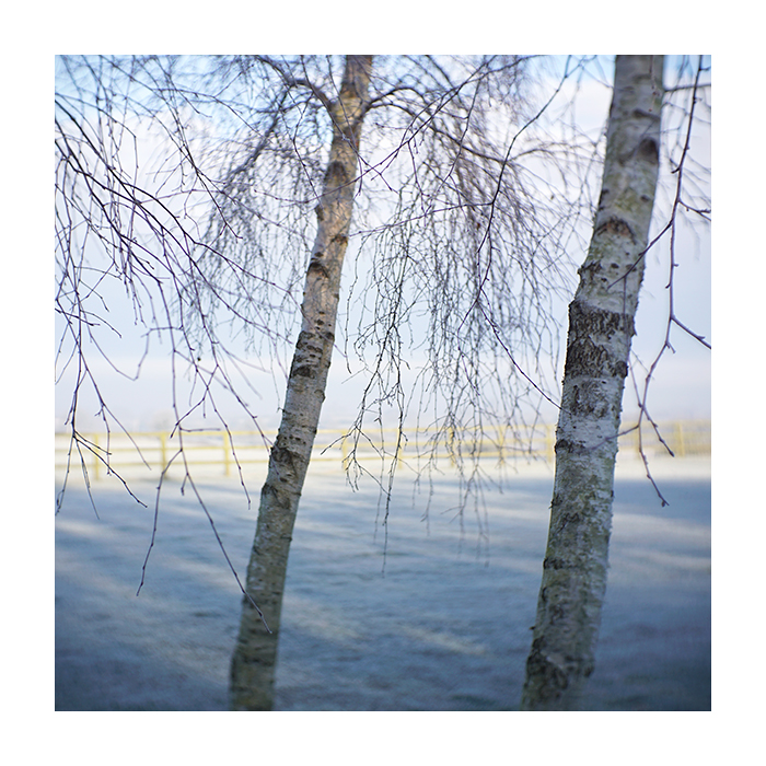 Retreat_Twin_Birches