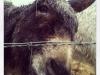 Ferdinand the Donkey