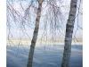 Retreat_Twin_Birches