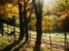 yoga-mindfulness-retreats-dorset-mellullah-woodland-walk-vie